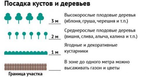 Расстояние от деревьев и кустарников до забора